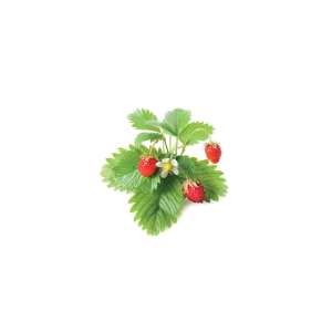 Click and Grow Refill 3-Pack - Wild Strawberry