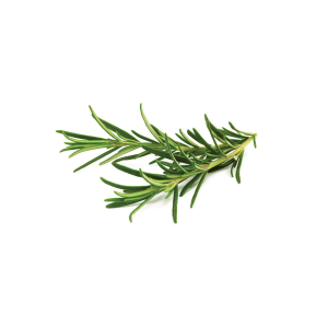 Click and Grow Refill 3-Pack - Rosmary